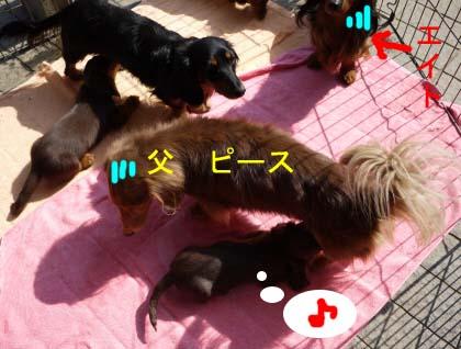 ぴーのちんちんのコピー.jpg