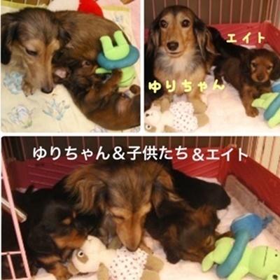 ゆりちゃんエイト1.JPG