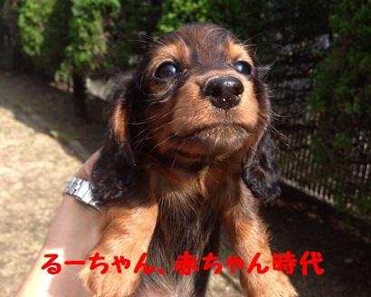 るーちゃん赤ちゃん時.JPG