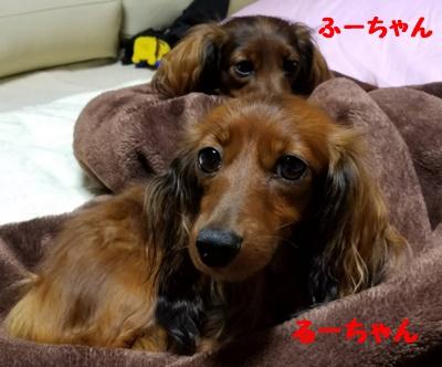 るー親子b.JPG