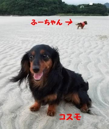 コスモ浜.JPG