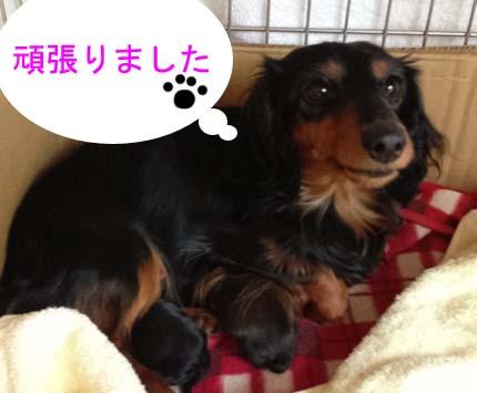 コスモ2のコピー.jpg