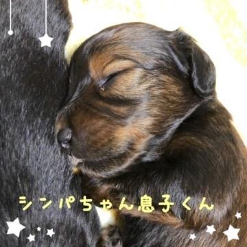 シンパ天使くんb.JPG