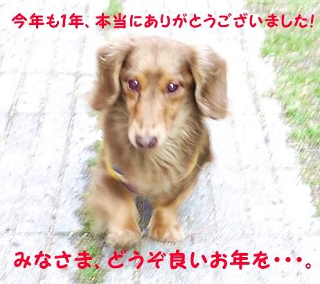 トコトコぴー.JPG