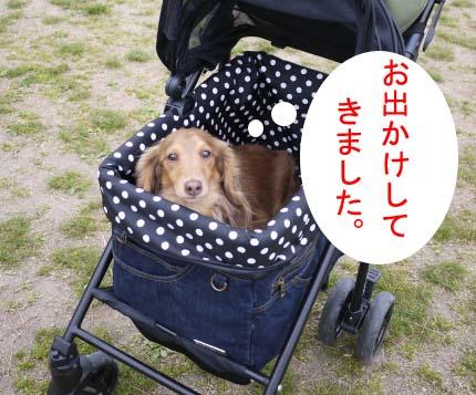 ピーかーとのコピー.jpg