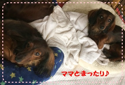 ママとロビンちゃん.JPG