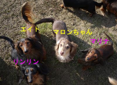 マロンちゃん庭2bのコピー.jpg