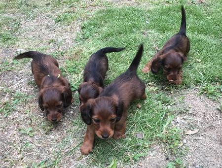 子犬たち庭b.JPG