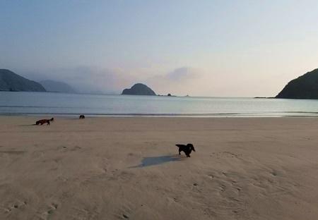 浜辺3ワン1.JPG