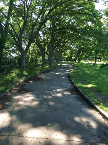 緑地の道1.JPG