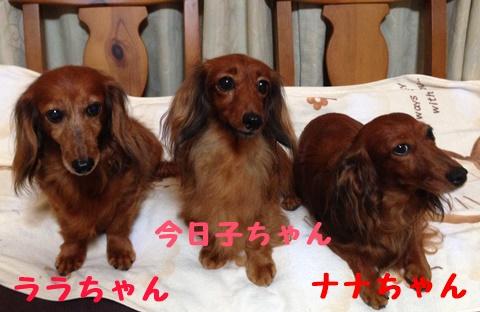 3ワン1.JPG
