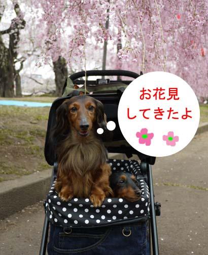 お花見えいとのコピー.jpg