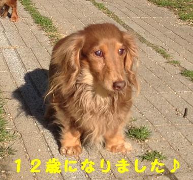 ぴーちゃん12歳.JPG