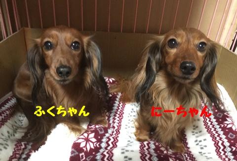 ふく&にー.JPG