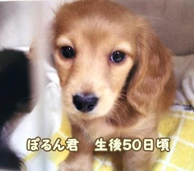 ぽるん生後50.jpg