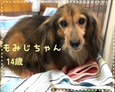 もみじ1.JPG