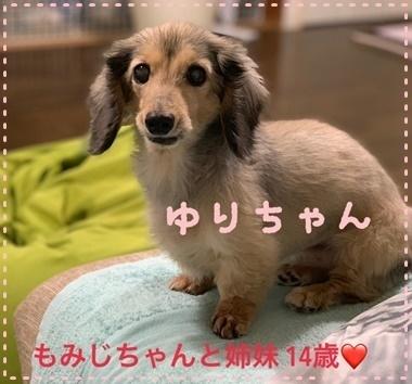 ゆりちゃん.JPG