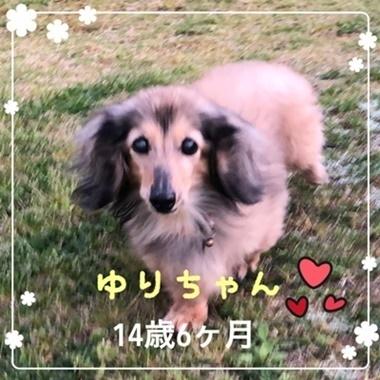 ゆりちゃん1.JPG