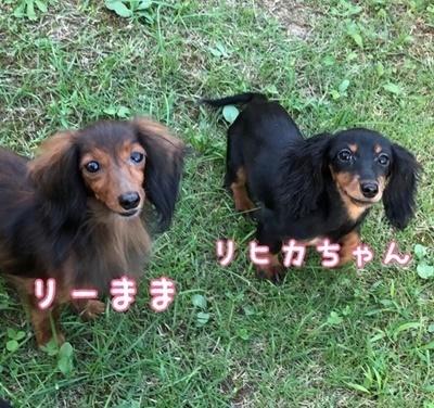 りーちゃんリヒカ.JPG