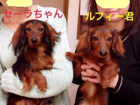 るふぃーとセーラ1.JPG