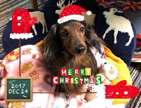 エイト11歳クリスマス.JPG