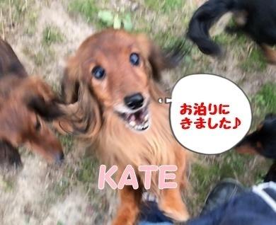 ケイト里帰り庭.jpg