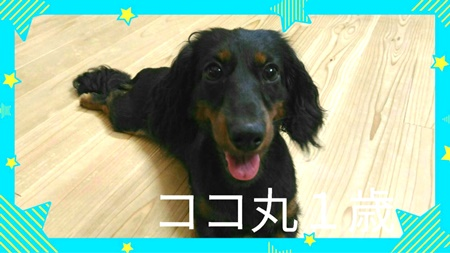 ココ丸.JPG