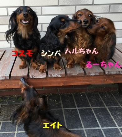 コスモるー、エイトb.JPG