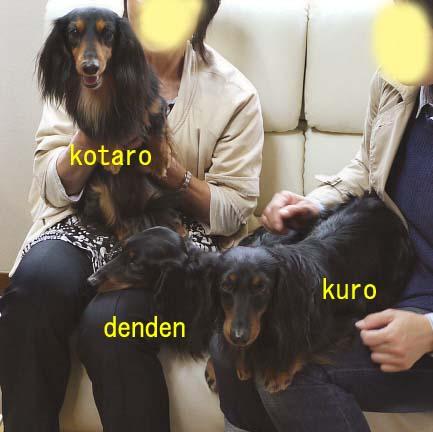 コタロとくろでんのコピー.jpg