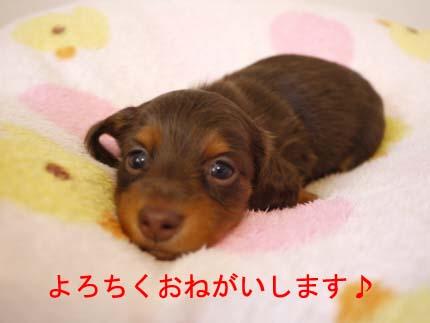 チョコたんおとこのこbのコピー.jpg
