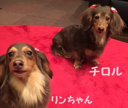 チロルとりんちゃん.JPG