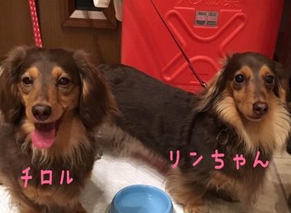 チロルとリンちゃん.JPG