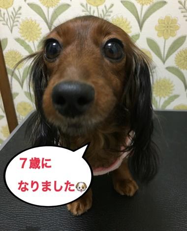 ハルちゃん7歳.JPG