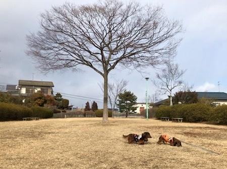 ハルエイト公園B.JPG