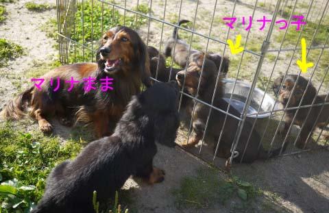マリナちゃんと子犬2のコピー.jpg