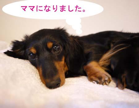 メロンコあっぷのコピー.jpg