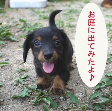 子犬にわ1bb.jpg