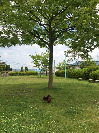 木の下犬.JPG