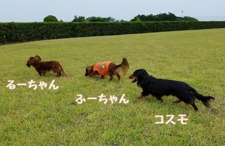 bながさき3ワン.JPG